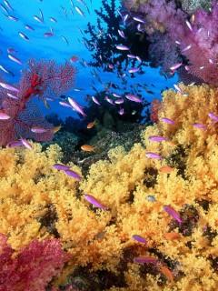 Яркие краски подводного мира с различными рыбками будут напоминать вам об отдыхе