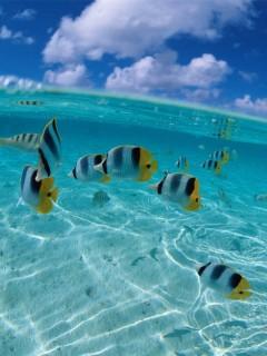 Под водой океана столько всего интересного. Скачай эту картинку и посмотри на мир из воды
